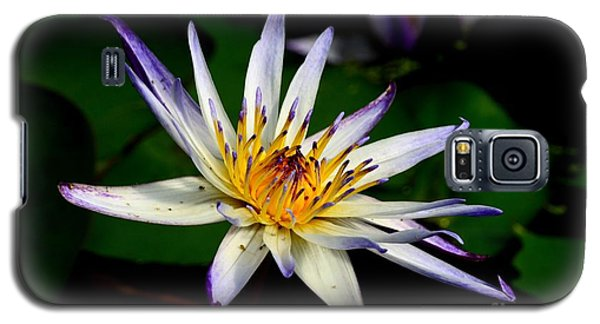 Beautiful Violet White And Yellow Water Lily Flower Galaxy S5 Case