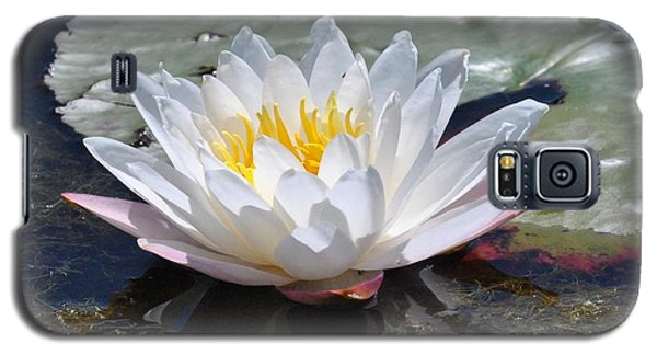 Beautiful Water Lily Galaxy S5 Case by Michele Kaiser
