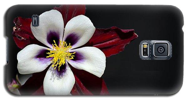 Beautiful White Petal Yellow Stamen Purple Shades Aquilegia Columbine Flower Galaxy S5 Case