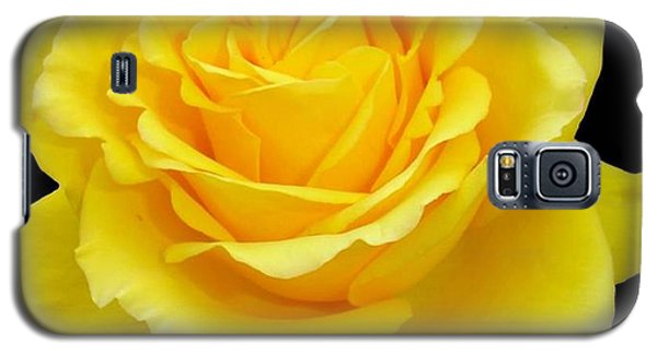 Beautiful Yellow Rose Flower On Black Background  Galaxy S5 Case