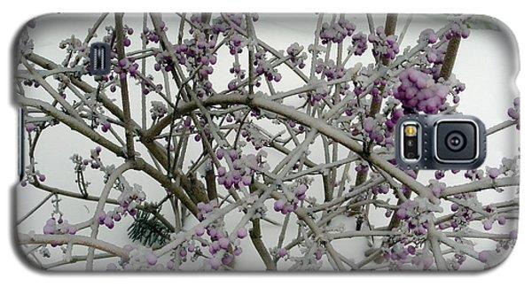Beauty Berry Winter Galaxy S5 Case by Marlene Rose Besso