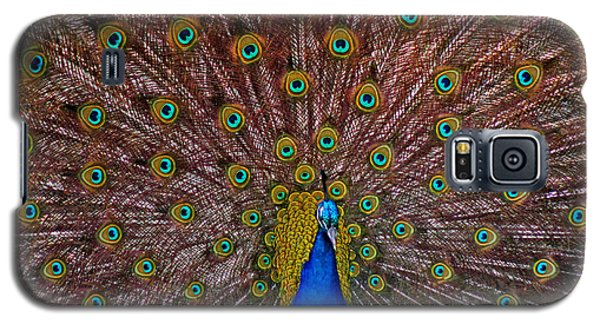 Galaxy S5 Case featuring the pyrography Beauty by Elaine Malott