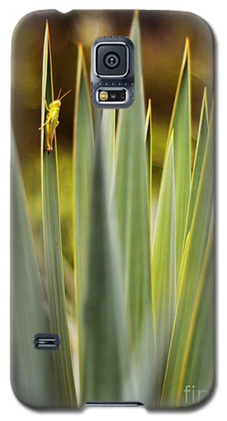 Beauty Grasshopper Galaxy S5 Case