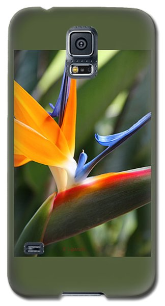 Beauty In Paradise Galaxy S5 Case