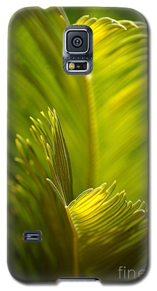 Beauty In The Sunlight Galaxy S5 Case by Deb Halloran