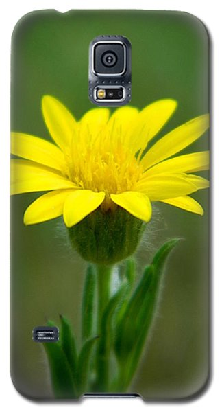 Beauty In Yellow Galaxy S5 Case by Ester  Rogers