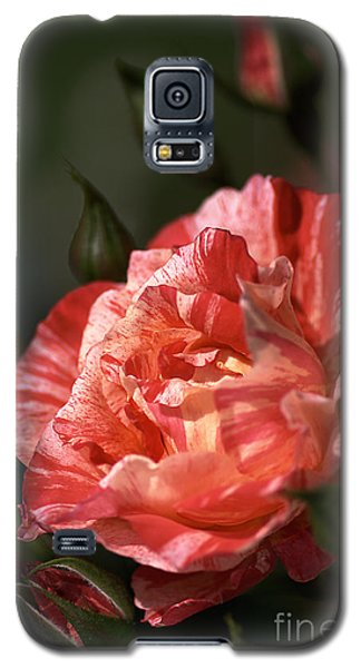 Galaxy S5 Case featuring the photograph Beauty Of Rose by Joy Watson