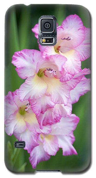 Beauty Upon Beauty Galaxy S5 Case by Morris  McClung