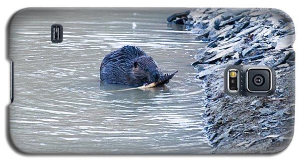 Beaver Chews On Stick Galaxy S5 Case