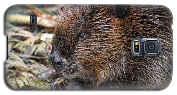 Galaxy S5 Case featuring the photograph Beaver Eating by Peggy Collins