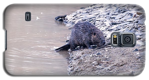 Beaver On Dry Land Galaxy S5 Case