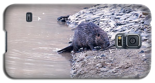 Beaver On Dry Land Galaxy S5 Case by Chris Flees
