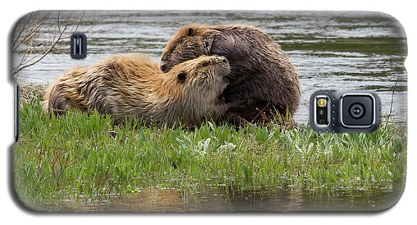Beaver Pair Grooming One Another Galaxy S5 Case by Ken Archer