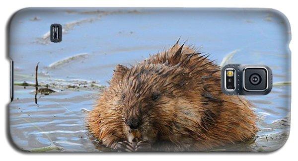 Beaver Portrait Galaxy S5 Case by Dan Sproul