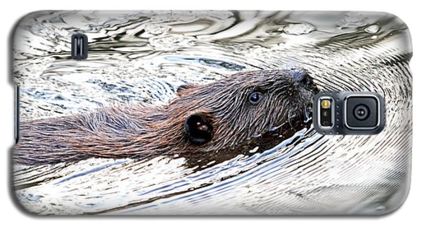 Galaxy S5 Case featuring the photograph Beaver Swimming In A Pond by Peggy Collins