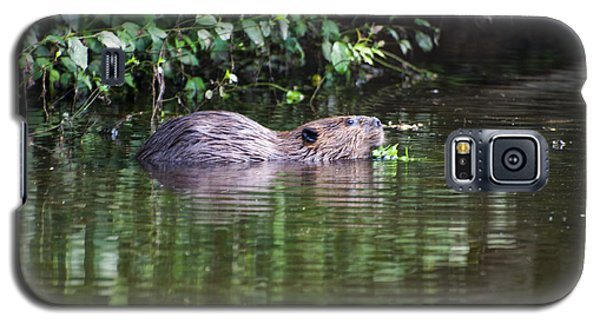 beaver swims in NC lake Galaxy S5 Case by Chris Flees