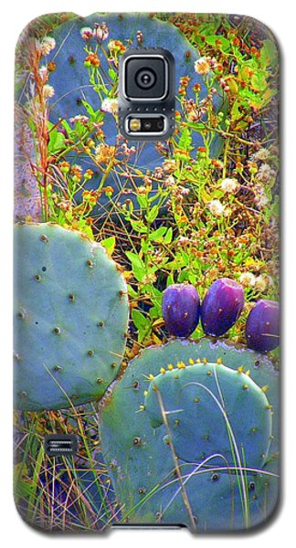 Galaxy S5 Case featuring the photograph Beavertail Cactus by Antonia Citrino