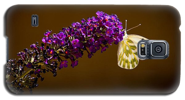 Galaxy S5 Case featuring the photograph Beckers On Butterfly Bush Sparks Nevada by Janis Knight