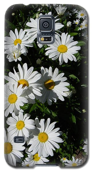 Bed Of Daisies Galaxy S5 Case by KD Johnson