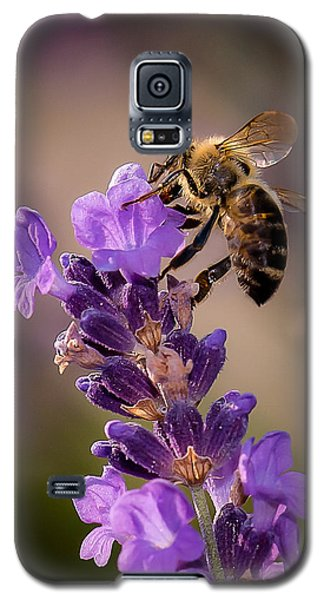 Honeybee Working Lavender Galaxy S5 Case