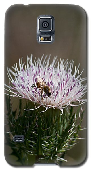 Bee And Pollination Pla 508 Galaxy S5 Case by G L Sarti