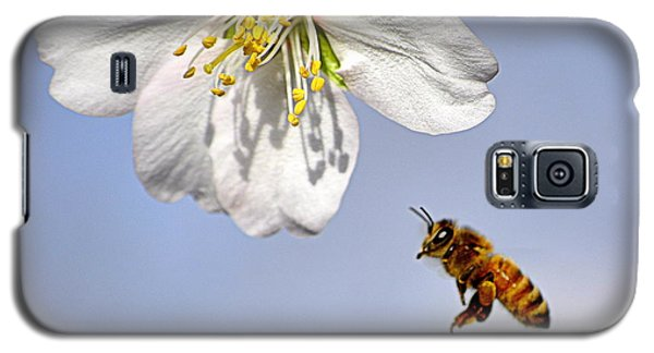 Galaxy S5 Case featuring the photograph Bee And The Almond Blossom by AJ  Schibig