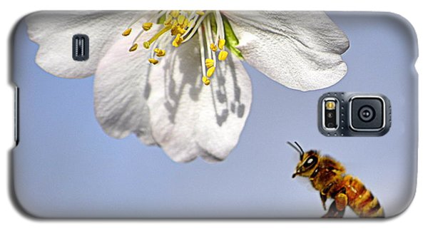 Bee And The Almond Blossom Galaxy S5 Case