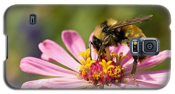 Bee At Work Galaxy S5 Case by Greg Graham