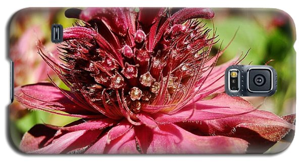 Bee Balm Details Galaxy S5 Case