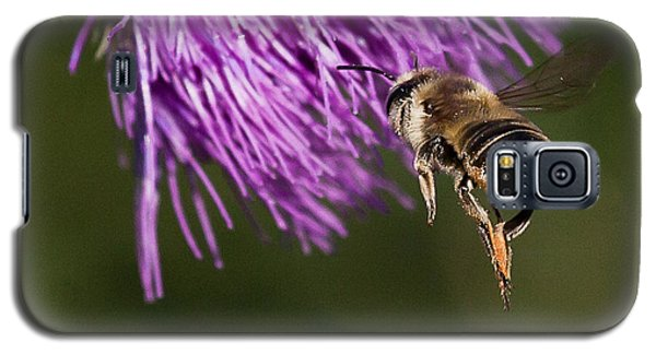 Bee Butt Galaxy S5 Case
