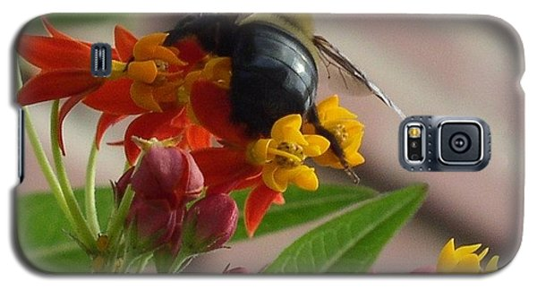 Bee Close Up Galaxy S5 Case