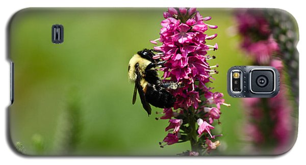 Bee Heaven Galaxy S5 Case