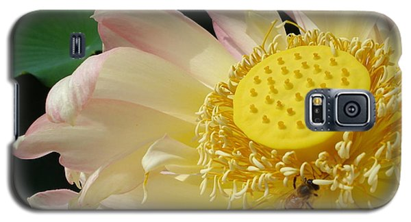 Bee Galaxy S5 Case by Jane Ford