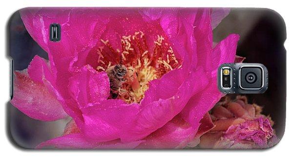 Bee On A Beavertail Galaxy S5 Case