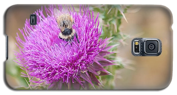 Bee On A Thistle Flower Galaxy S5 Case by Todd Soderstrom