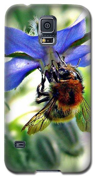 Bee On Borage Galaxy S5 Case by Morag Bates