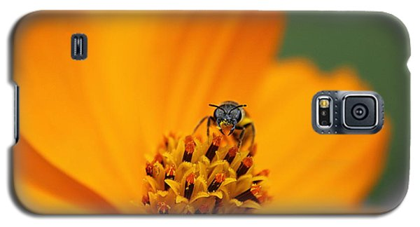 Galaxy S5 Case featuring the photograph Bee On Cosmo by Lisa L Silva