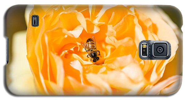 Bee Pollinating A Yellow Rose, Beverly Galaxy S5 Case by Panoramic Images