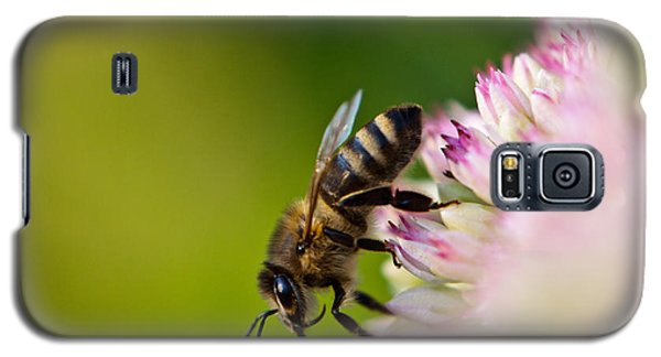 Galaxy S5 Case featuring the photograph Bee Sitting On A Flower by John Wadleigh