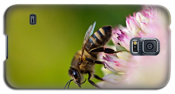 Bee Sitting On A Flower Galaxy S5 Case