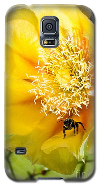 Bee Stands Guard Galaxy S5 Case
