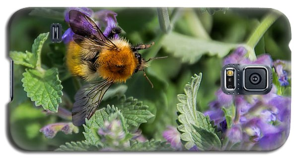 Galaxy S5 Case featuring the photograph Bee Too by David Gleeson