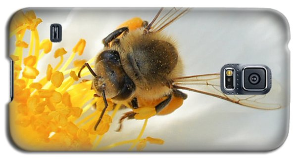 Galaxy S5 Case featuring the photograph Bee-u-tiful Squared by TK Goforth
