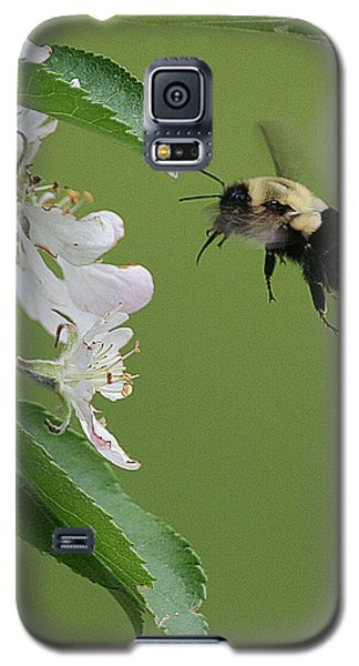 Bee With Apple Blossoms Galaxy S5 Case