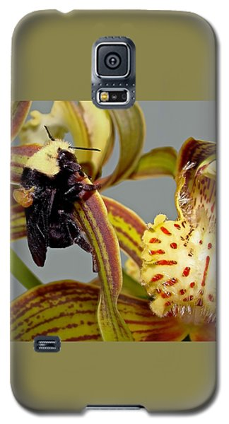 Bee With Pollen Sac On Its Back Galaxy S5 Case