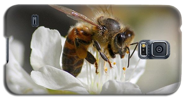 Bee4honey Galaxy S5 Case by Patrick Witz