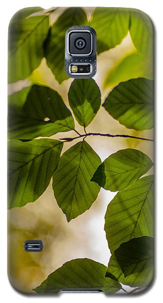 Beech Leaves And Bokeh Galaxy S5 Case