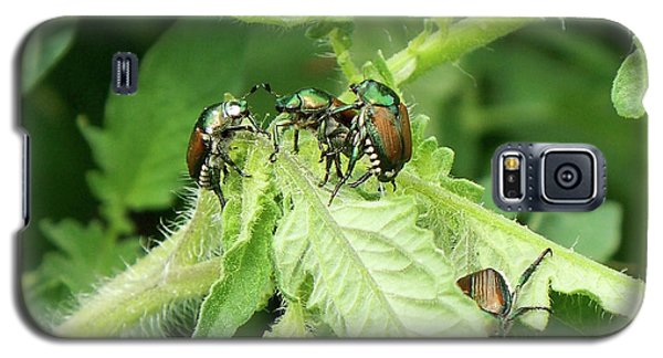 Galaxy S5 Case featuring the photograph Beetle Posse by Thomas Woolworth