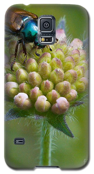 Galaxy S5 Case featuring the photograph Beetle Sitting On Flower by John Wadleigh