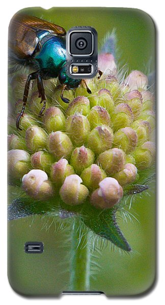Beetle Sitting On Flower Galaxy S5 Case